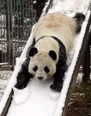 PandaSlide